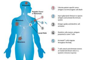 IPS Biopharma treatment diagram